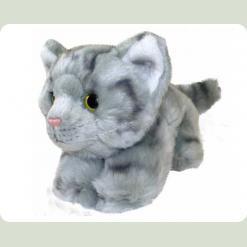 Кіт Віллі