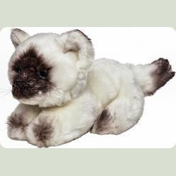 Кішка Сіма