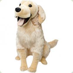 Собака ретривер сидячий